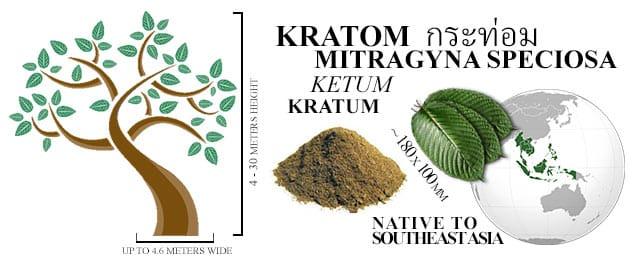 Kratom Trees